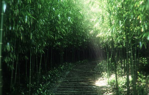 Картинка природа, заросли, тропа, бамбук, арт, тропинка, солнечные лучи