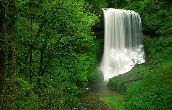 Картинка лес, водопад, USA, США, Oregon
