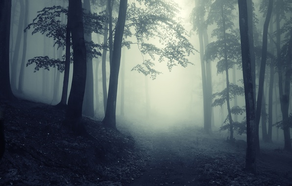 Картинка дорога, деревья, пейзаж, природа, туман, forest, misty, road, леса, trees, deep, landscape, nature, глубокие, жуткий, …