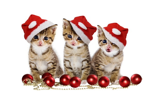 Картинка christmas, magic, balls, hat, kitten, eyes, cat, beautiful, pretty, beauty, kitty, merry christmas, sweet, cats, …