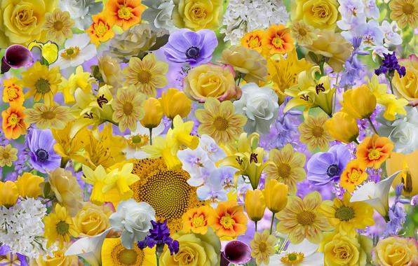 Картинка цветы, коллаж, роза, подсолнух, лепестки, ирис