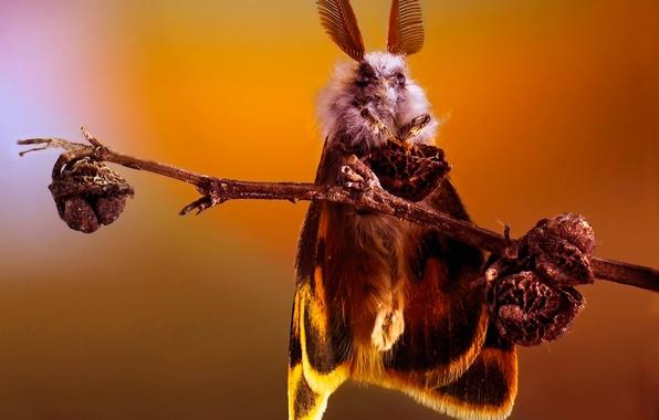 Картинка бабочка, ветка, насекомое