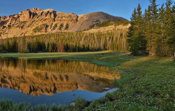 Картинка лес, лето, небо, трава, отражения, цветы, горы, природа, озеро