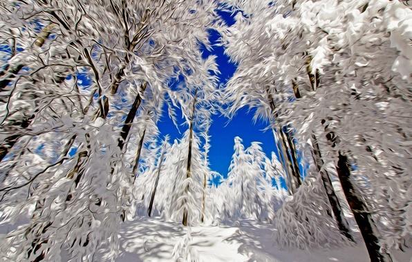 Картинка зима, лес, небо, снег, деревья, линии, пейзаж, природа, штрихи
