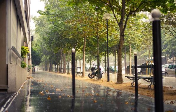 Картинка дорога, деревья, машины, город, дождь, улица, Франция, Париж, здания, дома, Paris, тротуар, скамейки, France, лавочки