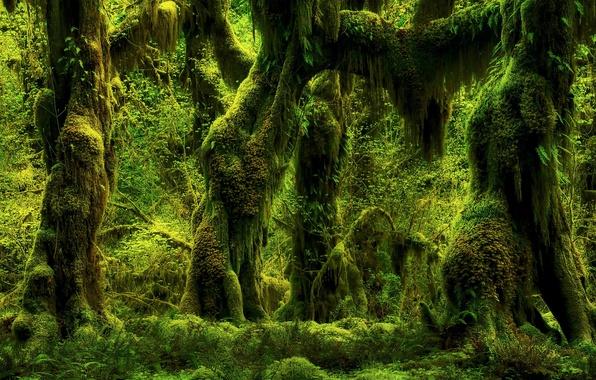 Картинка зелень, лес, деревья, природа, мох, растения, папоротники