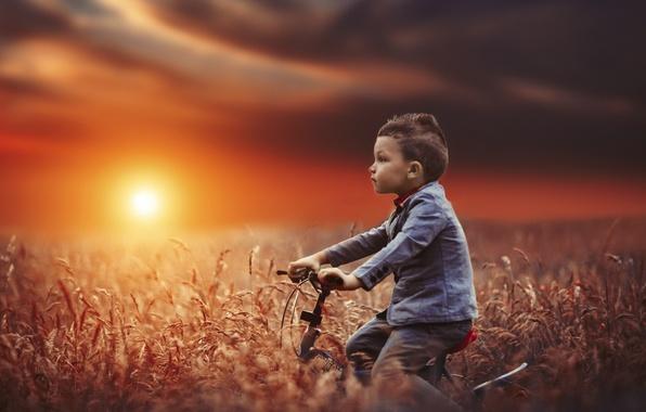 Картинка поле, закат, велосипед, настроение, мальчик