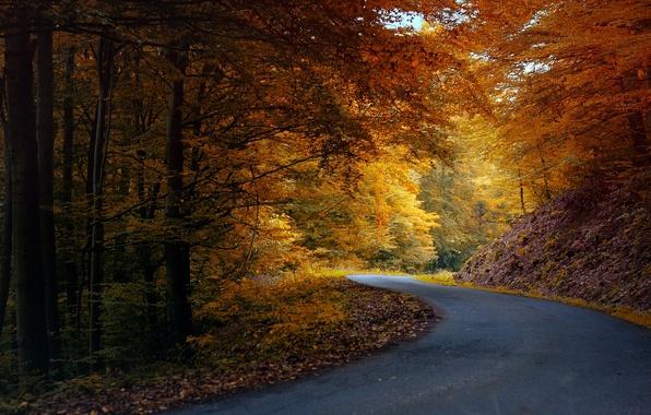 Картинка дорога, осень, лес, асфальт, листья, деревья, природа, желтые, оранжевые