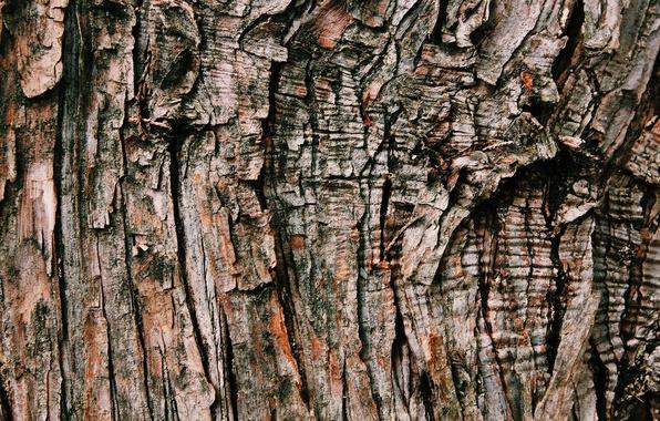 Картинка фон, дерево, текстура, кора