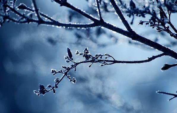Картинка холод, зима, иней, снег, природа, веточка, ветка, мороз
