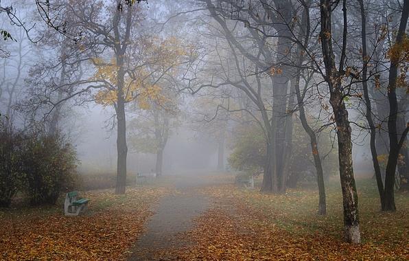 Картинка осень, туман, парк, аллея, скамейки