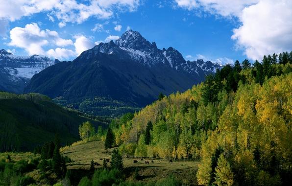 Картинка осень, лес, небо, облака, деревья, горы, природа, холмы