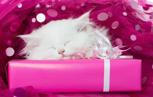 Картинка белый, подарок, сон, мордочка, котёнок, тюль, спящий котёнок, спящий, белый котёнок
