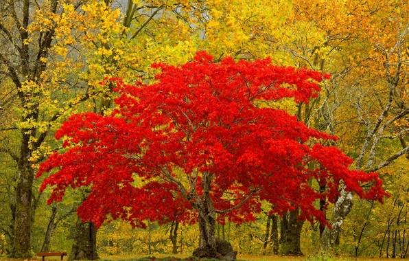 Картинка листья, природа, дерево, Лес