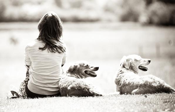 Картинка собаки, трава, девушка, природа, фон, девушки, черно-белый, настроения, обоя, собака, даль, брюнетка, девочка, широкоформатные обои, …