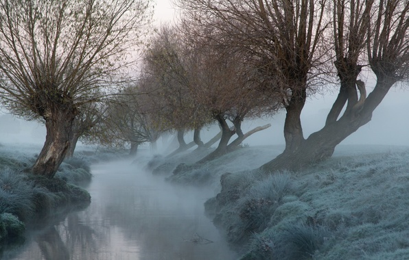 Картинка деревья, туман, река