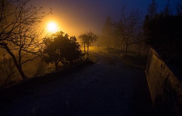 Фото обои дорога, небо, свет, деревья, туман, забор, вечер