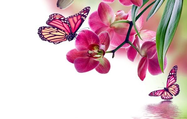 Картинка бабочки, цветы, орхидея, pink, water, flowers, beautiful, orchid, reflection, butterflies