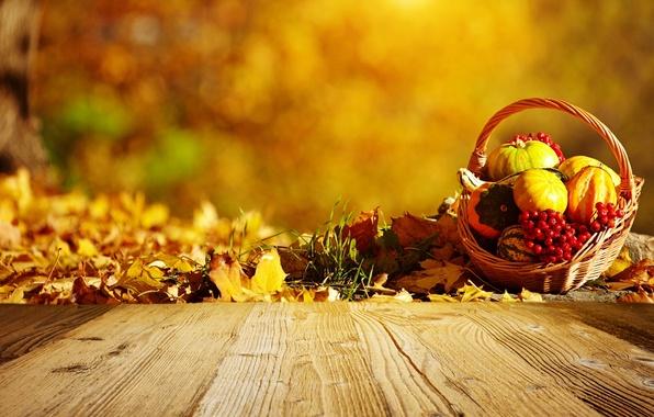 Картинка осень, корзина, тыквы, листики, рябина