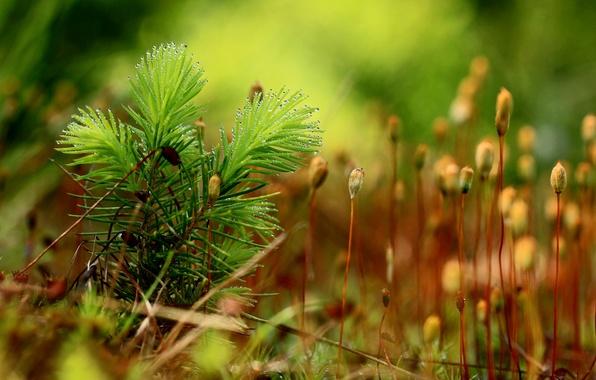 Картинка капли, роса, фон, мох, растения