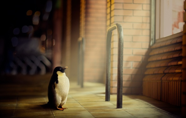 Картинка город, улица, пингвин