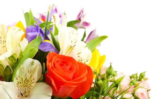 Картинка цветы, розы, тюльпаны, белый фон, ирисы, белые хризантемы, Альстромерия