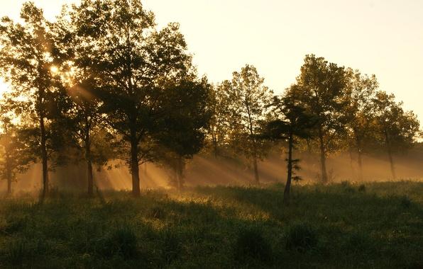 Картинка лес, лето, трава, туман, утро
