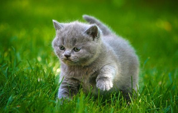 Картинка трава, прогулка, котёнок