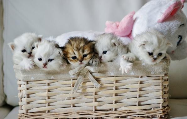 Картинка корзина, игрушка, котята, малыши, плюшевый мишка