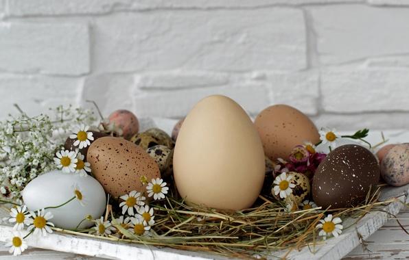 Картинка цветы, стена, праздник, яйца, Пасха, сено, подставка, Easter, крашенки, маргаритки