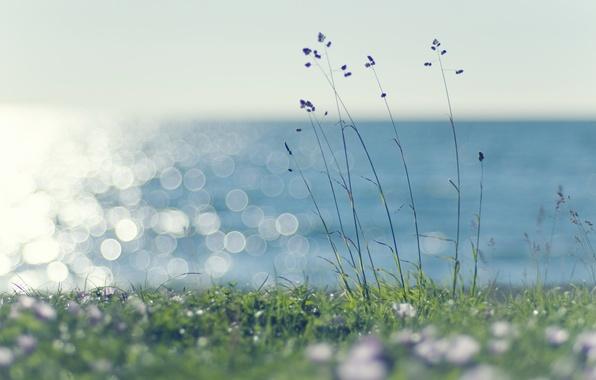 Картинка море, зелень, лето, трава, вода, солнце, свет, природа, зеленый, блики, тепло, ветер, газон, растения, колоски, ...