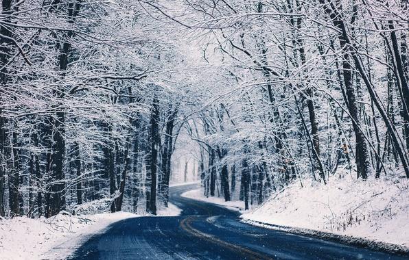 Картинка зима, дорога, лес, снег, деревья, природа, посадка