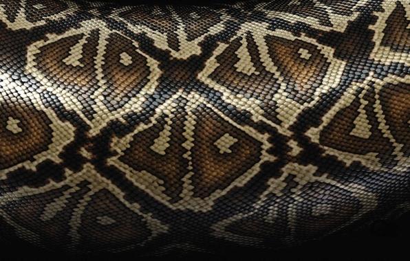 Картинка змеи, текстура, шкура