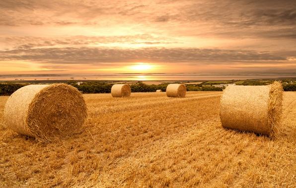 Картинка пшеница, поле, небо, облака, пейзаж, закат, природа, sky, field, landscape, nature, sunset, view, clouds, scenery, …