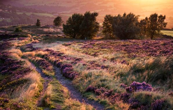Картинка дорога, деревья, закат, цветы, холмы