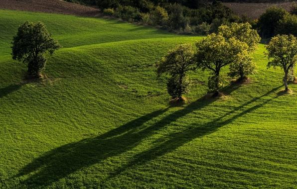 Картинка деревья, поля, Италия, Italy, Marche, Марке, Monti Sibillini National Park, Национальный парк Монти-Сибиллини, Pievebovigliana, Пьевебовильяна
