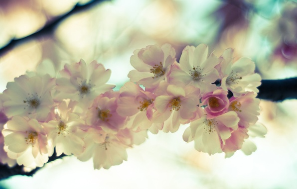 Картинка небо, макро, цветы, нежность, ветка, весна, светлые, сакура, розовые, цветение