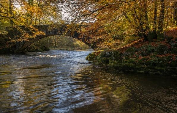 Картинка осень, лес, деревья, мост, парк, река, арка