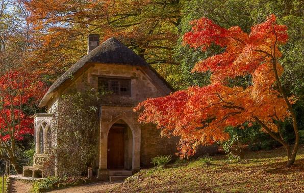 Картинка осень, деревья, дом, парк, Англия, клён, Стурхед, England, Wiltshire, Stourhead Garden, Уилтшир