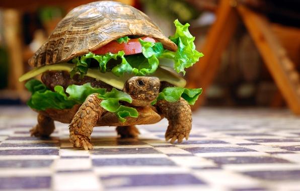 Картинка животные, черепаха, юмор, бутерброд, овощи