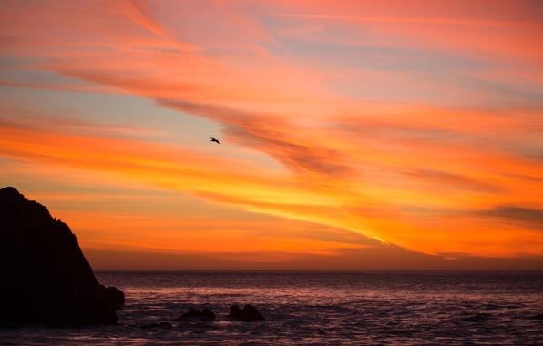 Картинка море, небо, облака, закат, скала, птица