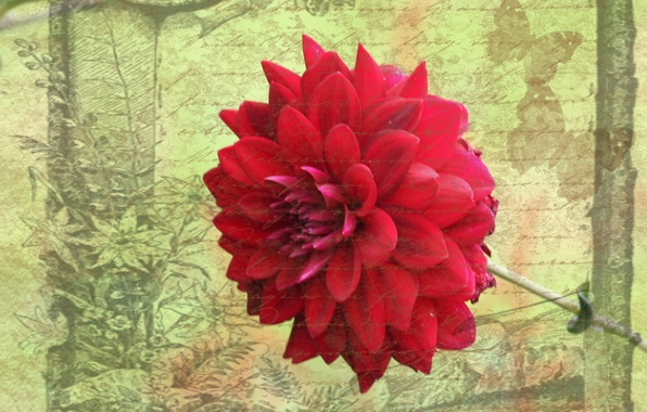 Картинка цветок, стиль, фон, открытка