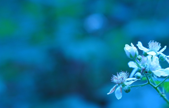 Картинка цветы, ветка, весна, бутоны, цветение