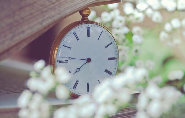 Картинка макро, цветы, часы, размытость, книга, белые, страницы, карманные, мелкие, гипсофила