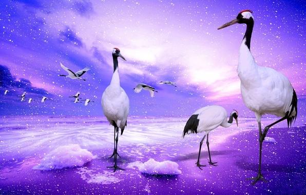 Картинка небо, вода, облака, полет, брызги, птицы, коллаж, крылья, журавли