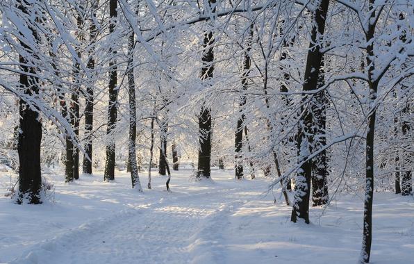 Картинка Зима, Снег, Парк, Дорожка, Winter, Park, Snow, Trees, Path