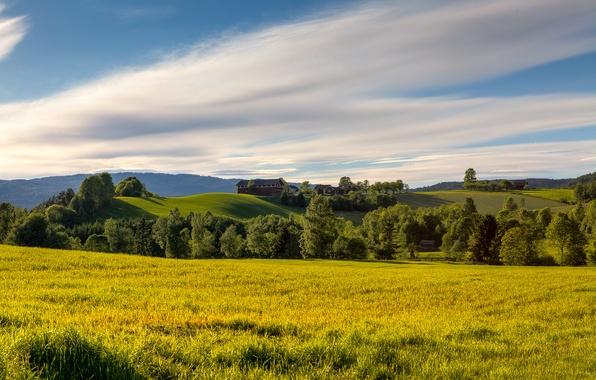 Картинка поле, лето, небо, трава, облака, деревья, природа, холмы, поляна, Норвегия, просторы