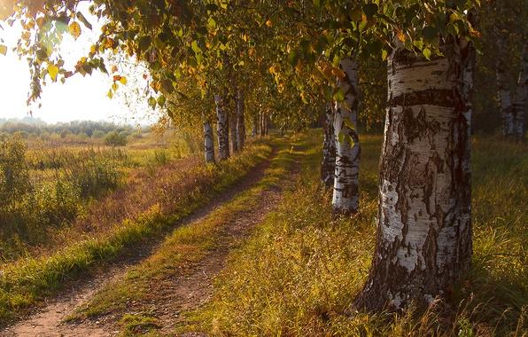Картинка дорога, поле, осень, деревья, березы