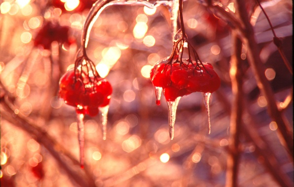 Картинка лед, зима, макро, блики, ягоды, блеск, сосульки, алый, калина