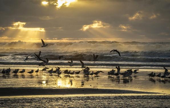 Картинка море, волны, пляж, небо, лучи, свет, птицы, берег, чайки